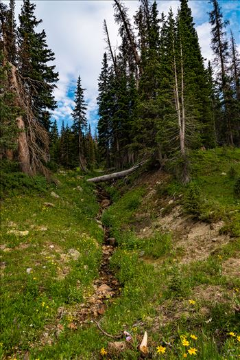 Watershed in Rocky Mountain National Park by Sarah Williams