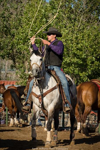 Ready for Roping.jpg -