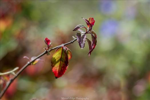 Leaves in the Sun 10272015.jpg by Sarah Williams