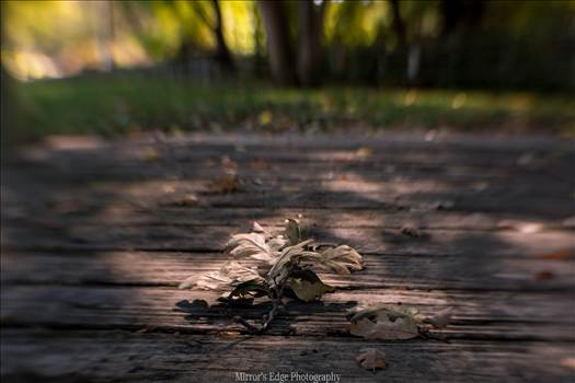 Oak Leaves Fallen 11102015.jpg by Sarah Williams