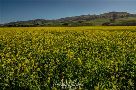 Yellow Fields and Green Hills 02132016.jpg by Sarah Williams