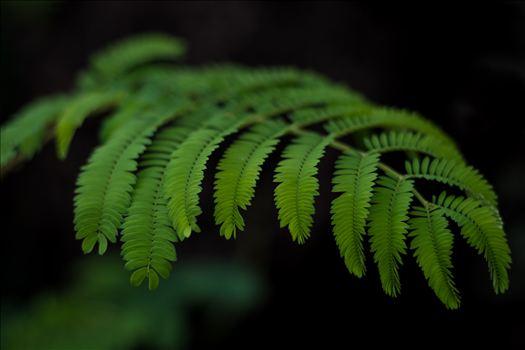 Green Fern 10252015.jpg by Sarah Williams