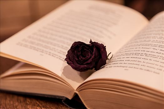 Black Rose in a Book.jpg by Sarah Williams