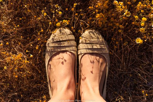 Wildflower Feet.jpg by Sarah Williams