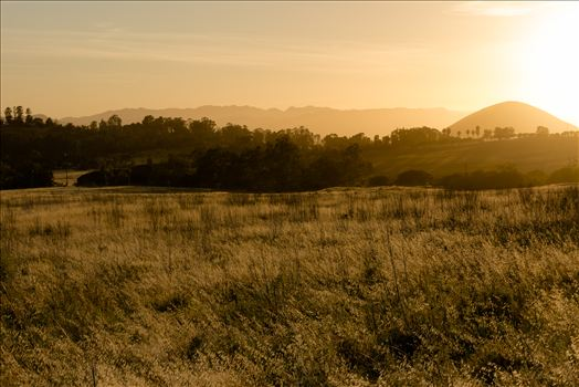 Golden Fields at Sunset.jpg by Sarah Williams