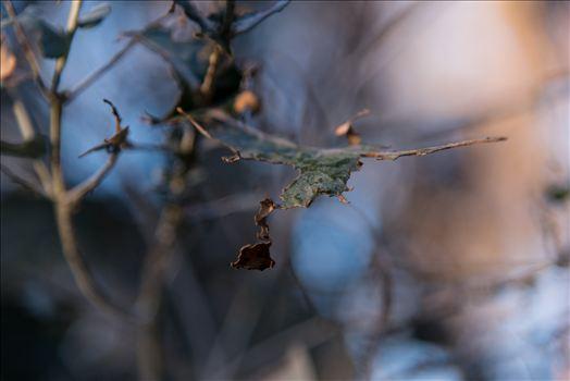 Frosty Morning Fragments.jpg by Sarah Williams