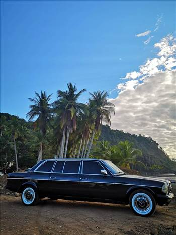 JACO BEACH PALM TREE LIMOUSINE COSTA RICA.jpg by richardblank