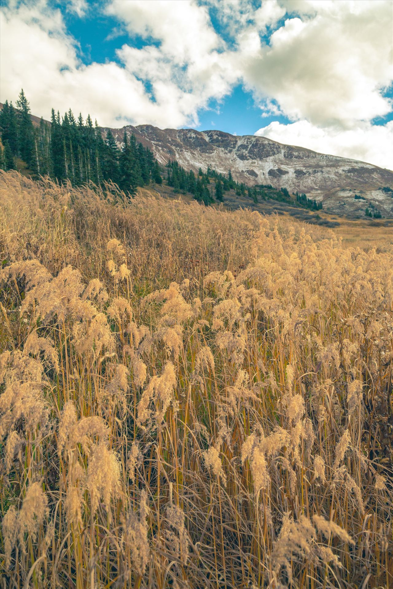 Into the Wild Mount Baldy Wilderness Area near Crested Butte, Colorado. by Scott Smith Photos