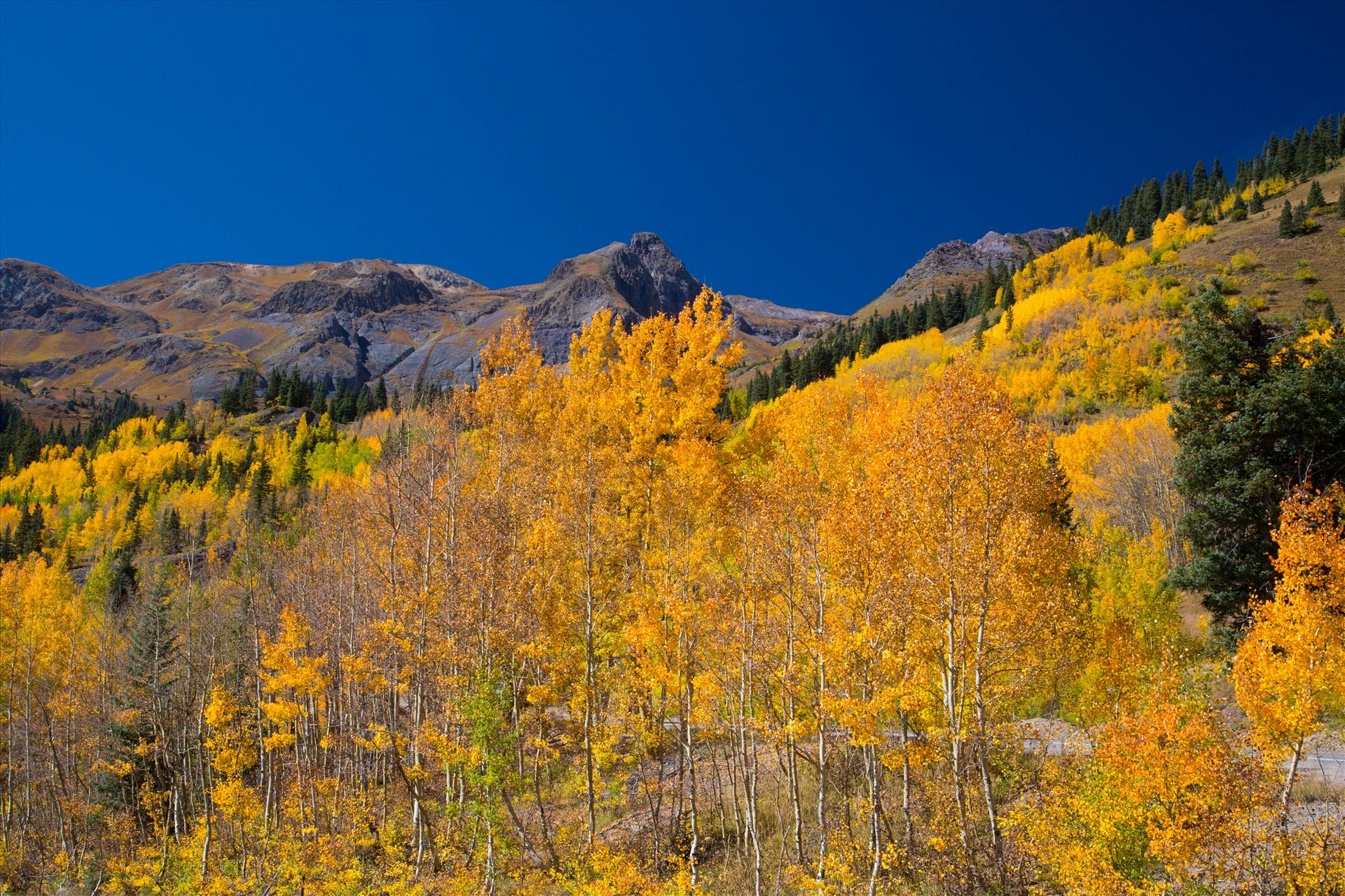 Million Dollar Highway A quick shot of the aspens from the million dollar highway between Ourway and Silverton, Colorado. by Scott Smith Photos