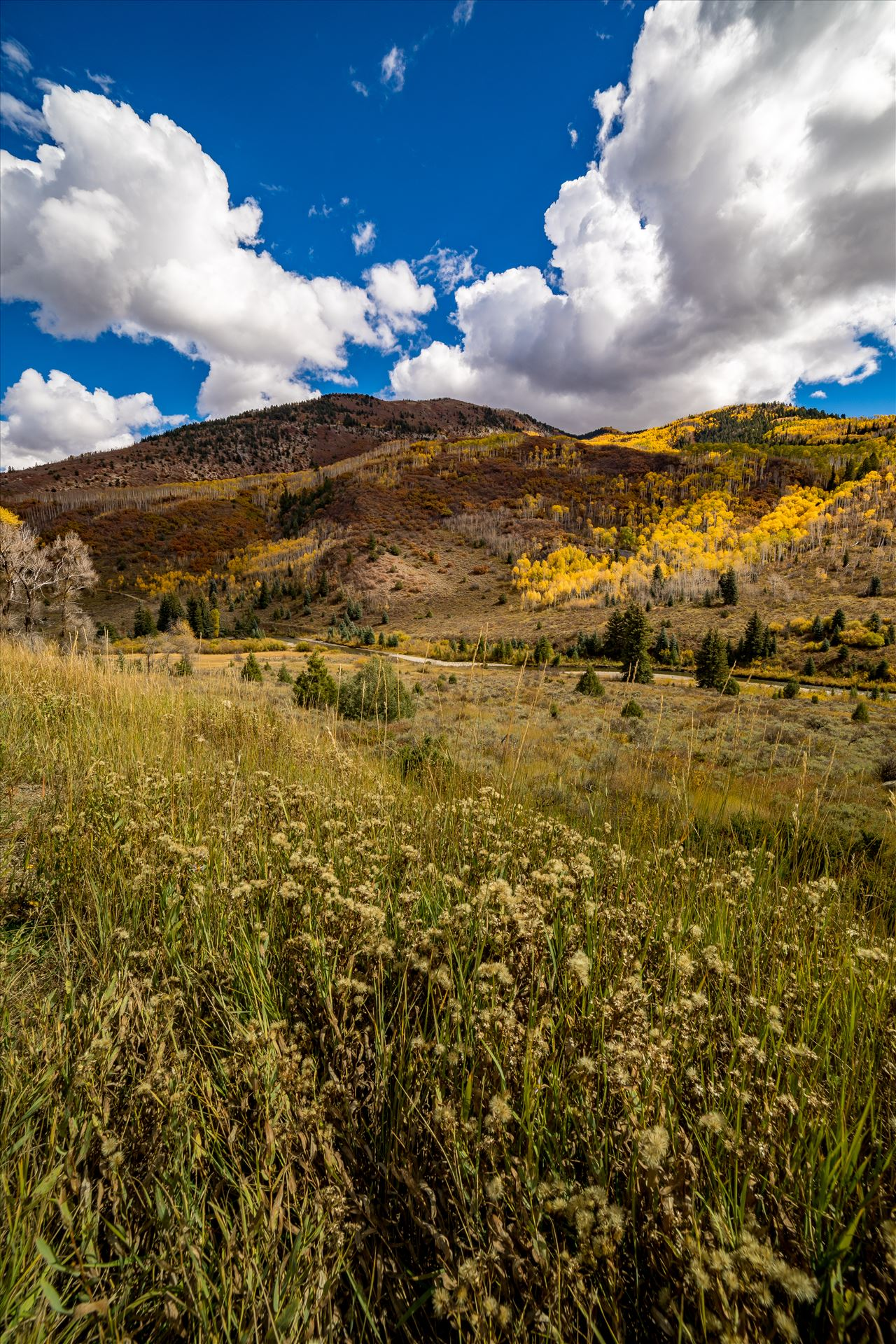 Fall in Aspen Snowmass Wilderness Area No 2 Summer grasses give way to fall colors between Redstone and Marble, Colorado. by Scott Smith Photos
