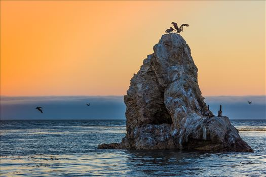 Pelican Rock by Scott Smith Photos