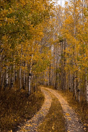 Unmarked Road by Scott Smith Photos
