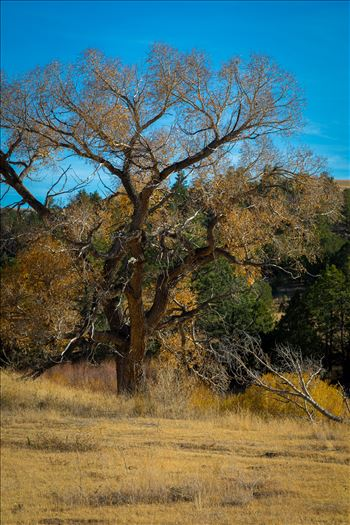 Country Tree No 1 by Scott Smith Photos