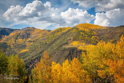 Snowmass Hillside No 4 by Scott Smith Photos