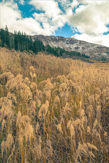 Into the Wild - Mount Baldy Wilderness Area near Crested Butte, Colorado.