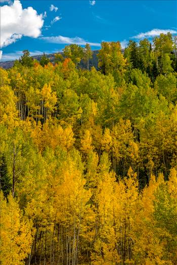 Snowmass Hillside No 2 by Scott Smith Photos