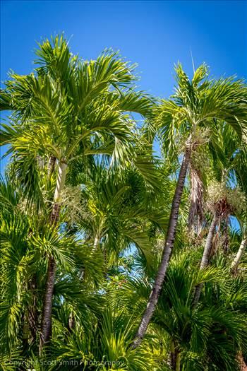 Palm Trees by Scott Smith Photos