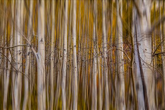 Aspen Alignment by Scott Smith Photos
