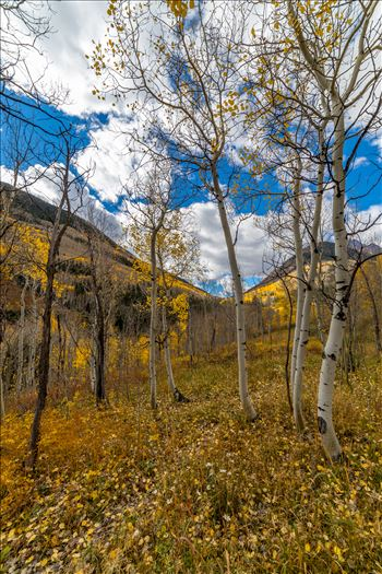 Maroon Creek Aspens by Scott Smith Photos