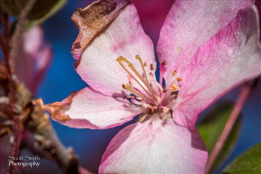 Spring Bloom by Scott Smith Photos