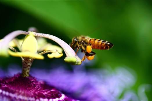 Pollen by Scott Smith Photos