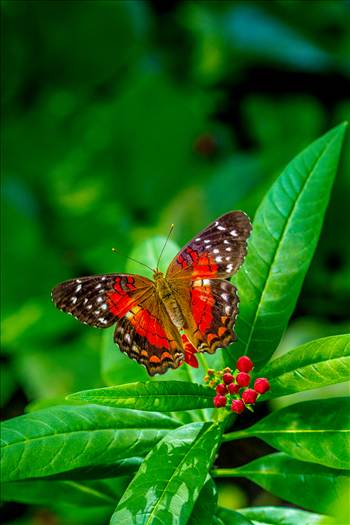 Butterfly at Rest by Scott Smith Photos