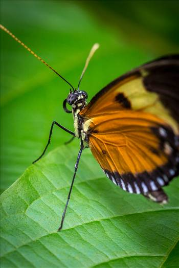 Butterfly Close Up by Scott Smith Photos