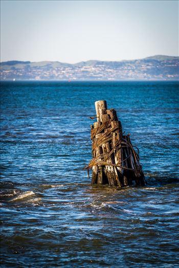 San Francisco Bay Pilings by Scott Smith Photos