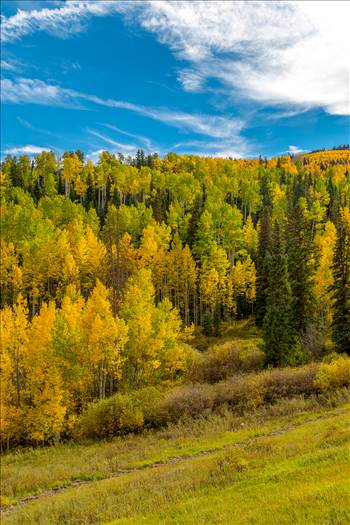 Snowmass Hillside No 3 by Scott Smith Photos