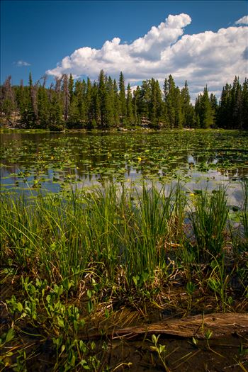 Nymph Lake by Scott Smith Photos