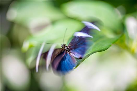 Flutter by Scott Smith Photos