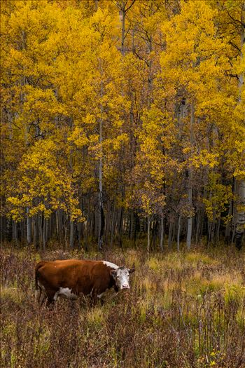 Fall Grazing by Scott Smith Photos