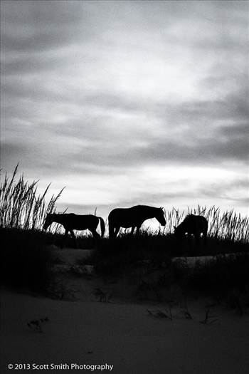 Wild Horses of Currituck No 2 by Scott Smith Photos