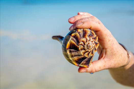 Shell in Hand by Scott Smith Photos
