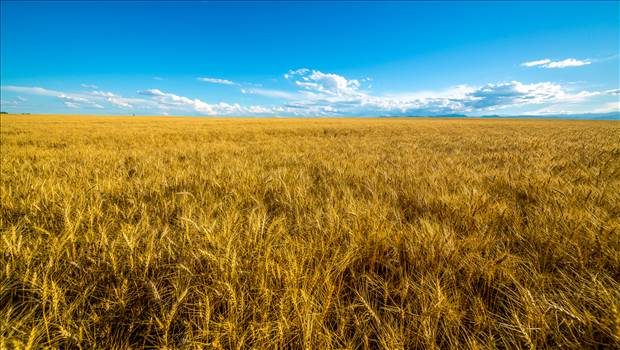 Summer Fields I by Scott Smith Photos