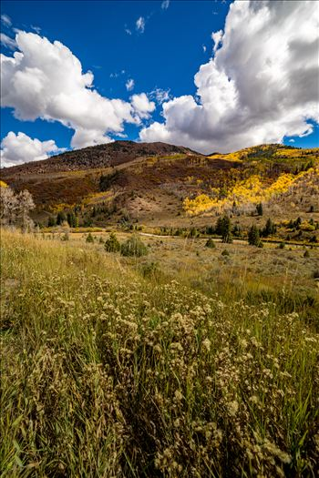 Fall in Aspen Snowmass Wilderness Area No 2 by Scott Smith Photos