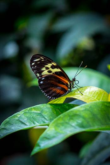 Resting Butterfly by Scott Smith Photos