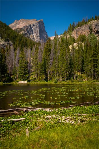 Hallett Peak from Nymph Lake by Scott Smith Photos