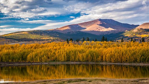 Reflecting Colorado Gold by Scott Smith Photos