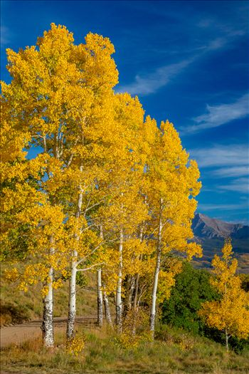 Silent Aspens by Scott Smith Photos