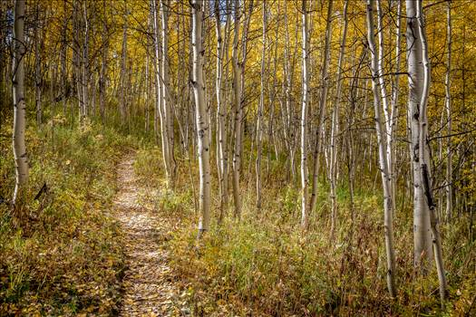 Hiking on Rim Trail by Scott Smith Photos
