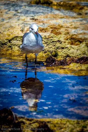 Beachcomber by Scott Smith Photos