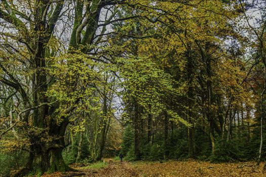 Woodland Walks 1 by Frank Etchells Photography