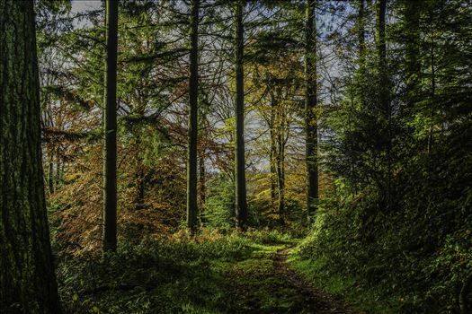 Woodland Path 1 by Frank Etchells Photography