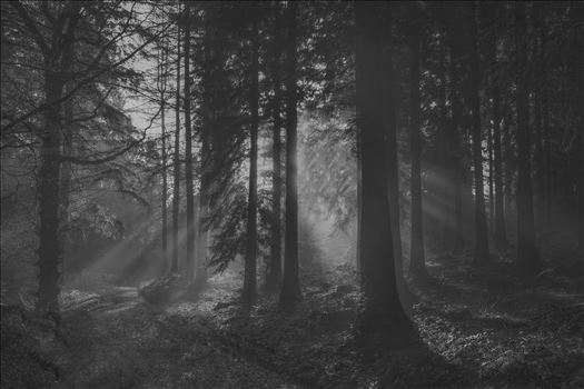 Misty Morning Sun Rays (B/W) by Frank Etchells Photography