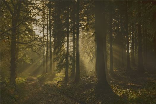 Misty Morning Sun Rays by Frank Etchells Photography