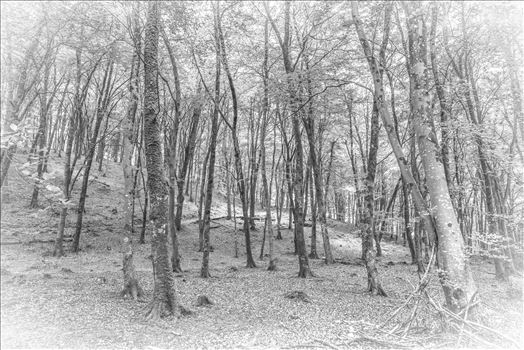Watersmeet Wood, BW, Sketch Effect by Frank Etchells Photography