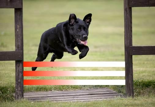 DogJumping.png by LayoutsByAllyexaandYukon