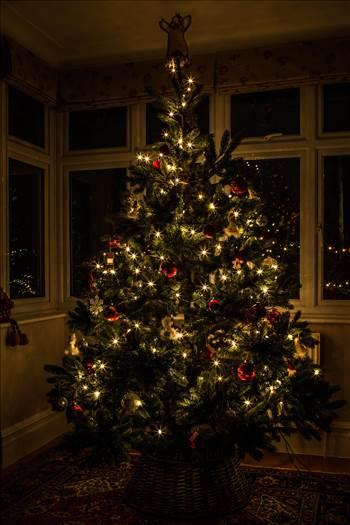 Christmas Tree-8360.jpg - undefined