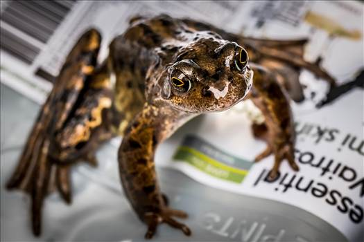 Frog.jpg - undefined
